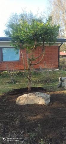 Puun siirto ja kiven asennus